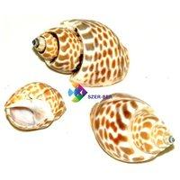 Kis méretű csigaházak, kagylók