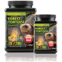 Exo Terra Forest Tortoise Juvenile