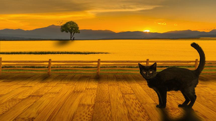 Cica a naplementében