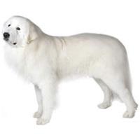 Tápok fehér szőrű kutyáknak