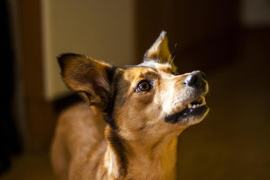 ab711b97f752 Hogyan nevelj engedelmes kutyát - és magadból jó falkavezért?