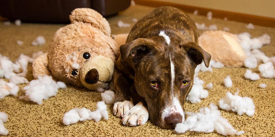 Szeparációs szorongásban szenvedő kutya - Fotó: Sheila Sund - Eviscerated - Flickr