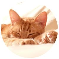 Nyugtatók, stresszoldók macskáknak