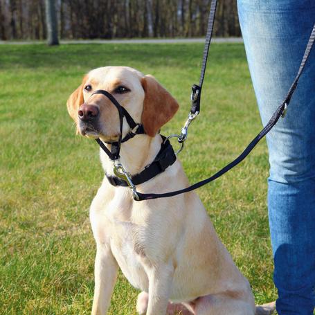 Trixie Top Trainer Training kutyahám