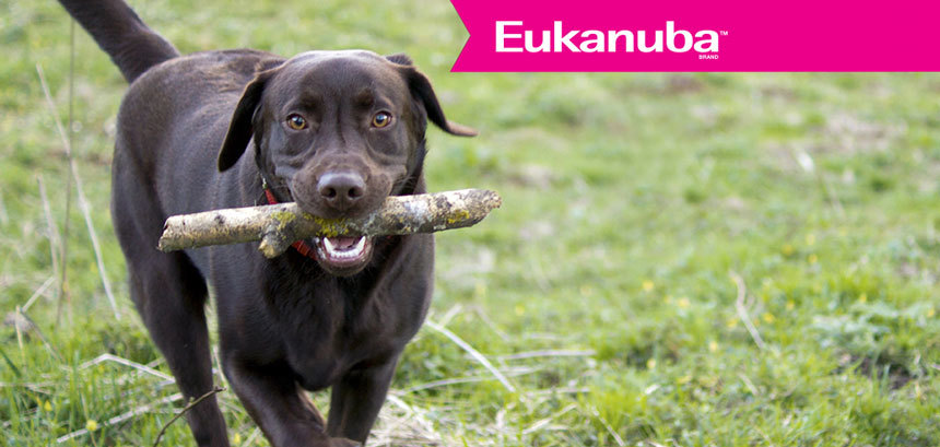 Eukanuba az egészséges fogakért