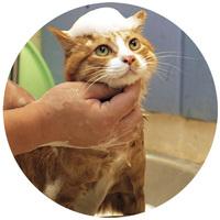 Samponok, szőrzetápolók macskáknak