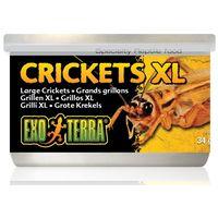 Exo Terra Crickets XL – Puhára főzött nagy tücskök hüllőknek