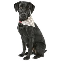 Scruffs Insect Shield Bandana - Rovarpajzs kutyakendő