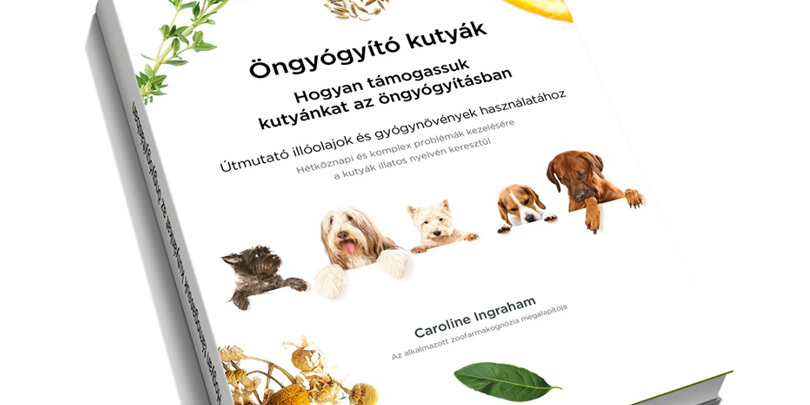 Öngyógyító kutyák