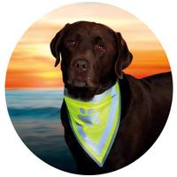 Fényvisszaverő kutyafelszerelések