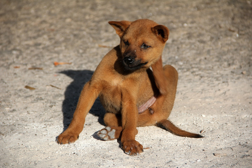 Vakarózó kutyus