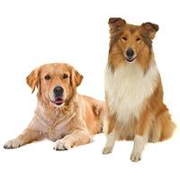 Tápok felnőtt kutyáknak