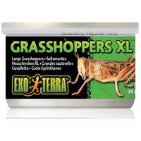 Exo Terra Grasshoppers XL – Puhára főzött nagy szöcskék hüllőknek