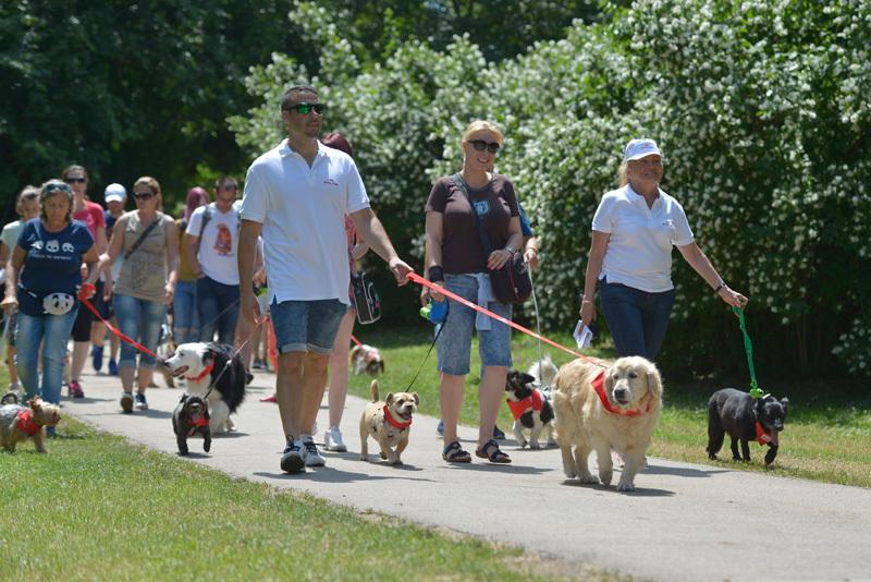 Royal Canin DogWalk Varga Győző közös séta