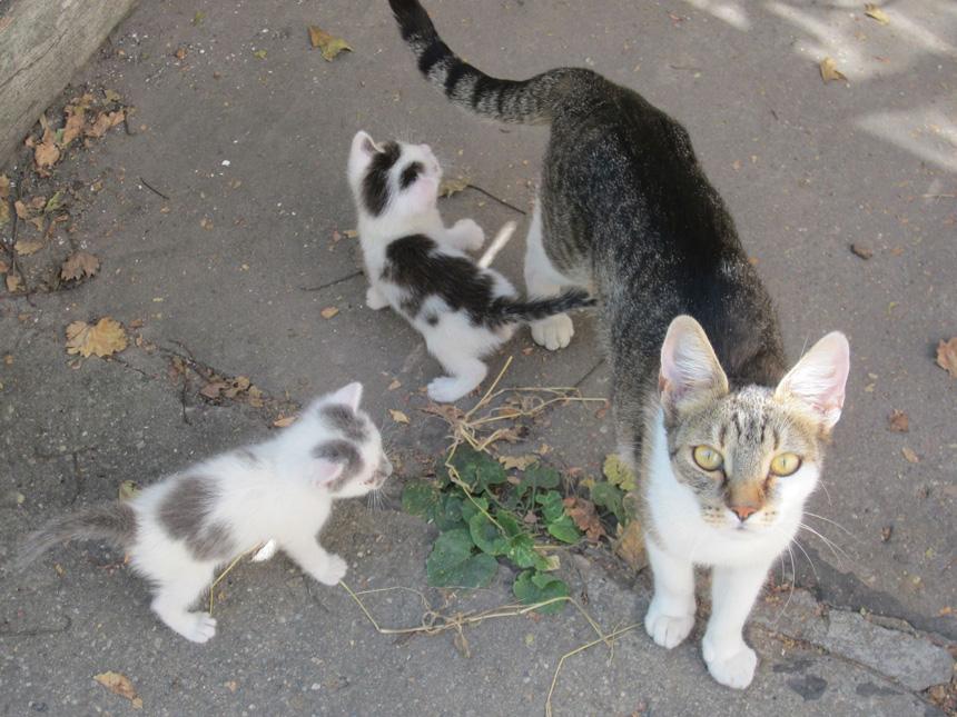Bella ősanya és két kölyke