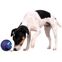 Snack labdák kutyáknak