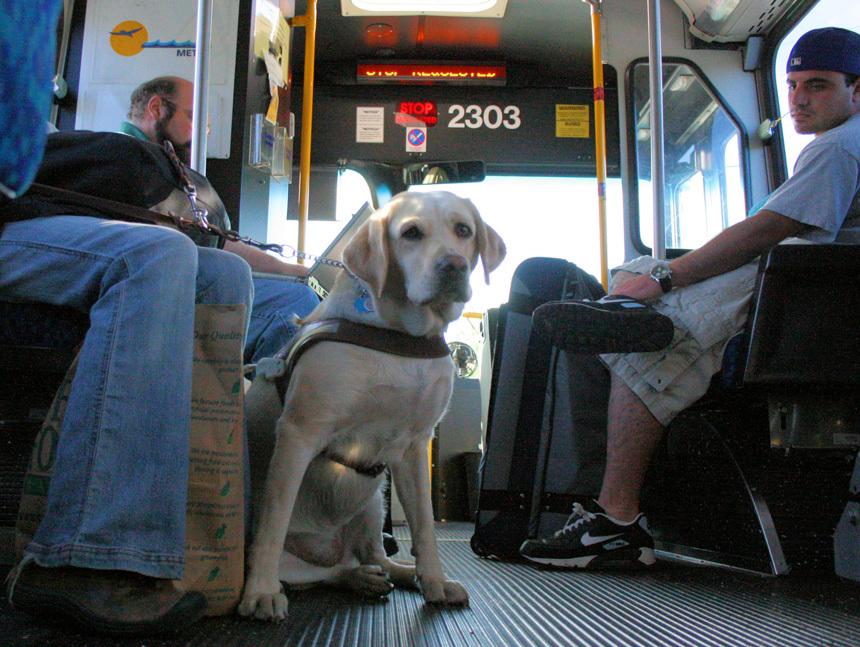 Kutya buszon utazik gazdájával - Fotó: Richard Masoner / Cyclelicious - Flickr