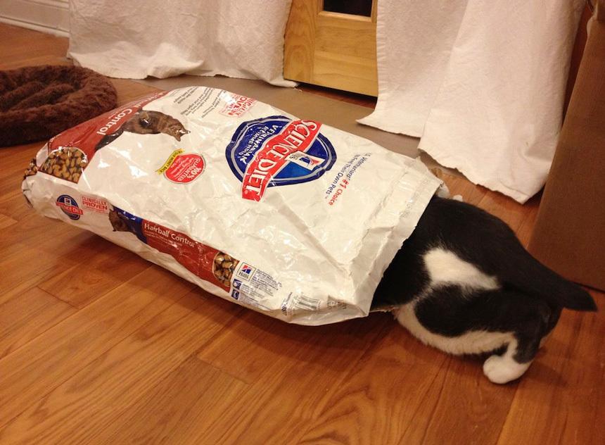 A megfelelő macskatáp kiválasztása
