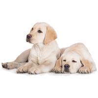 Tápok növendék kutyáknak