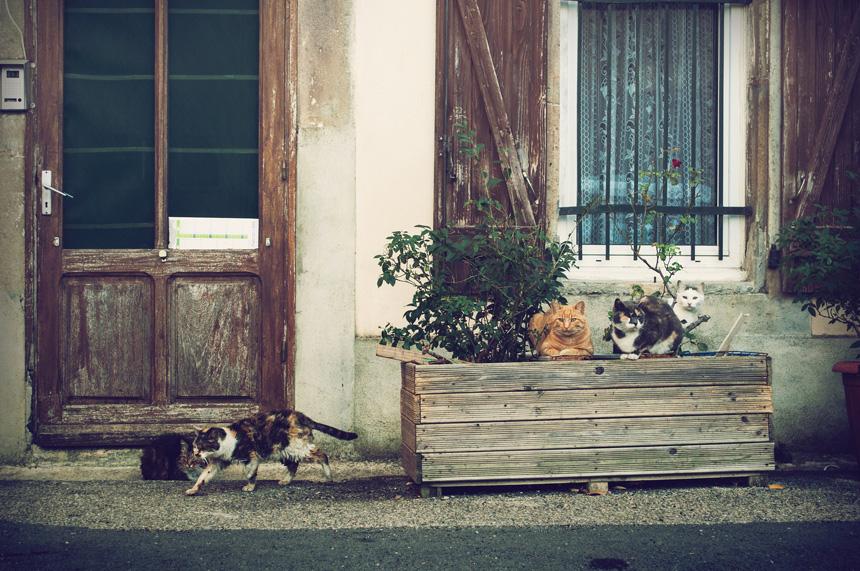 Macskák szabadon a ház előtt