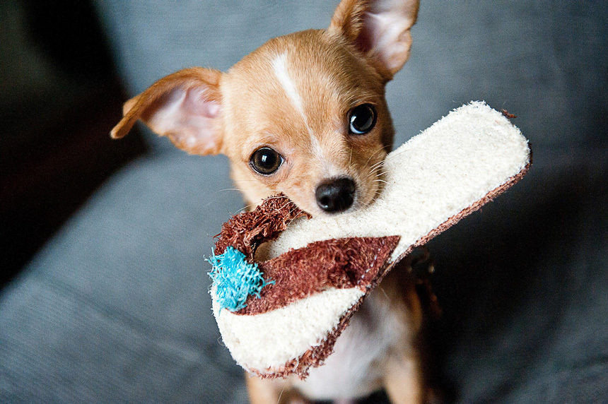 Fontos, hogy legyen, amivel játsszon a kutyus