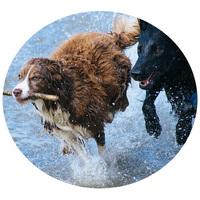 Termékek sokat mozgó kutyáknak