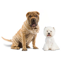 Termékek bőr- és szőrproblémákkal küzdő kutyáknak