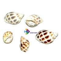 Mini méretű csigaházak, kagylók