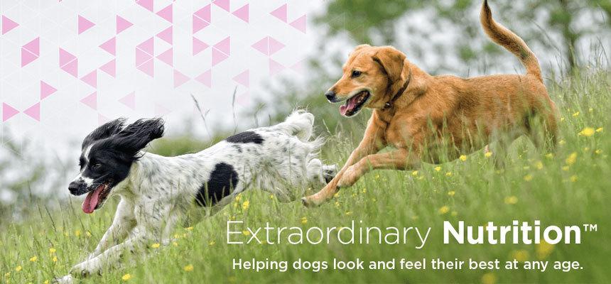 Eukanuba tápok az egyes kutyák igényeire szabva