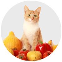 Vitaminok, táplálékkiegészítők macskáknak
