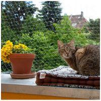 Átlátszó védőháló erkélyre macskáknak