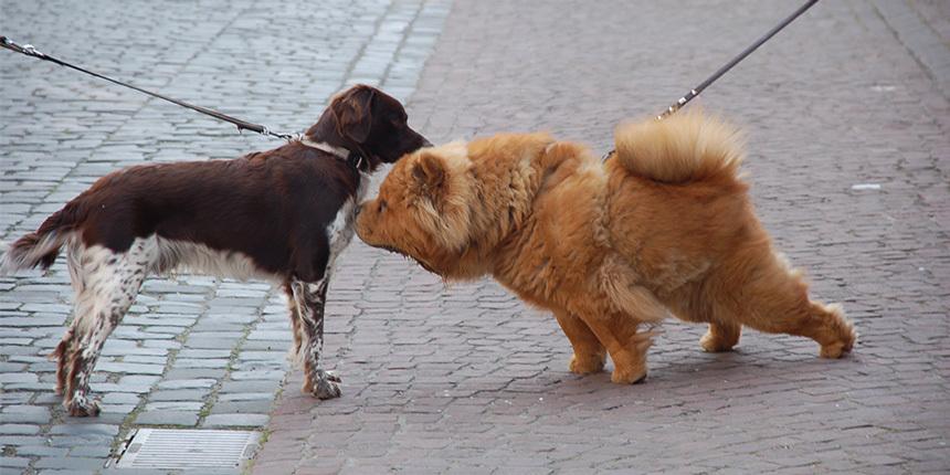 Kutyák a tüzelési időszakban