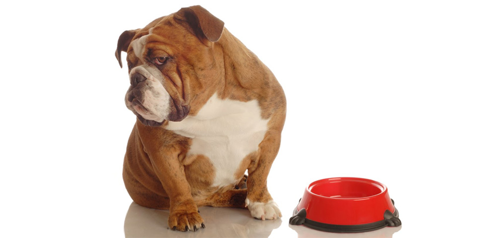 Étvágytalan kutya