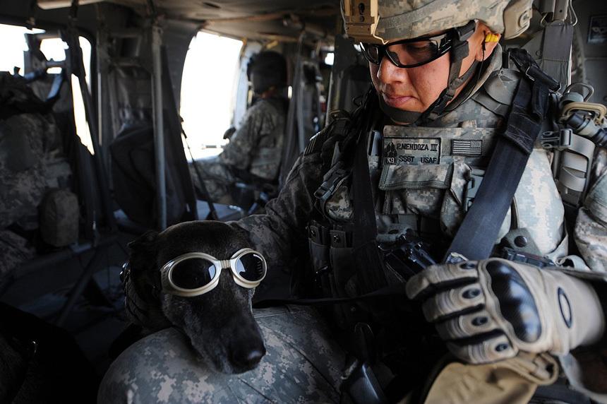 Kutya helikopteren