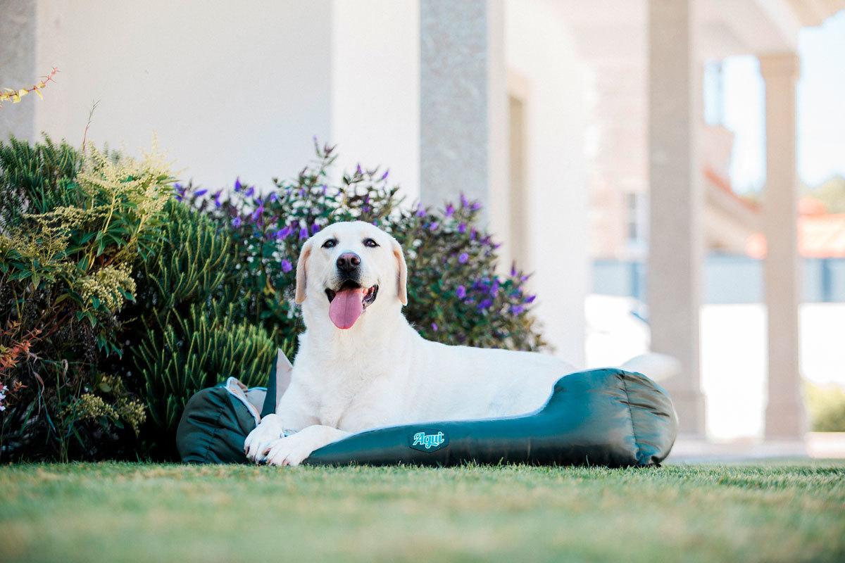 Agui Waterproof Bed   Vízálló kutyaágy levehető huzattal   Zöld