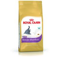 Royal Canin British Shorthair Kitten