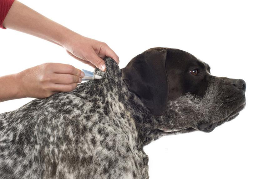 Védd meg kutyádat az élősködőktől