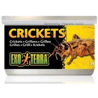 Exo Terra Crickets – Puhára főzött kis tücskök hüllőknek