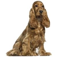 Tápok közepes testméretű kutyáknak