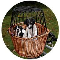Kosarak kutyáknak