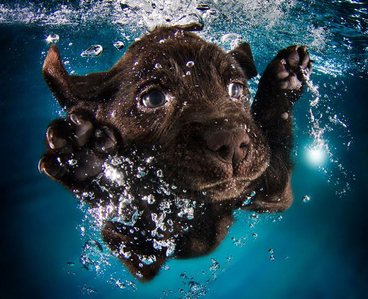 Kutyus a vízben