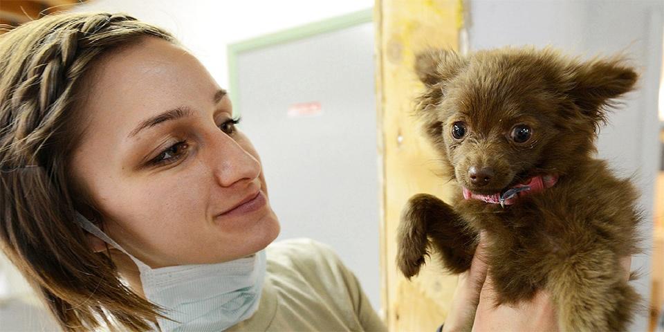 Kutya állatorvosnál
