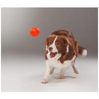 Liker narancssárga labda kutyáknak