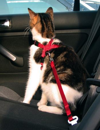 Trixie autós biztonsági öv + hám macskáknak