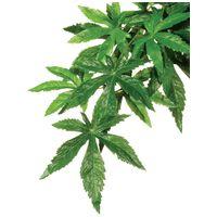 Exo Terra Abutilon műnövény