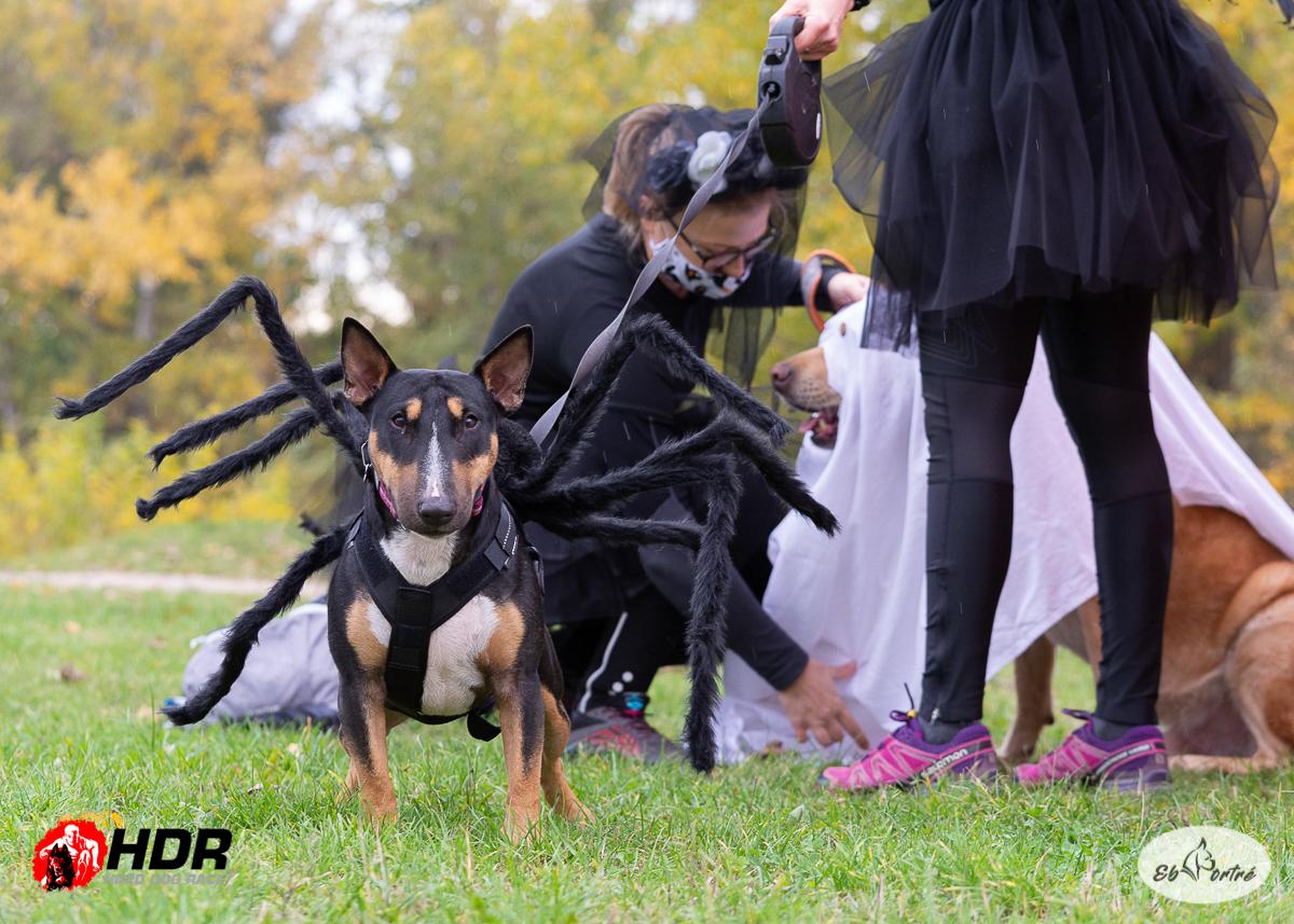 Kutya/pók - HDR, Halloween, 2020