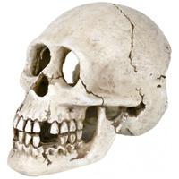Trixie emberi koponya akvárium dekor