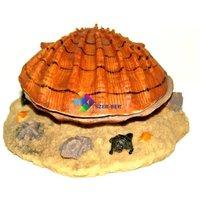 Barna kagyló levegőporlasztós akvárium dekoráció