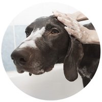 Samponok, balzsamok kutyáknak