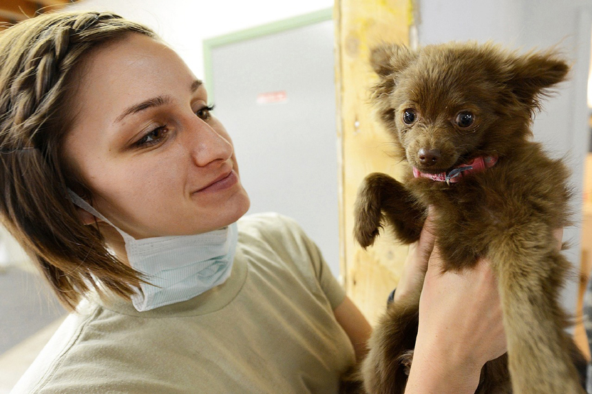 Kutya orvosnál